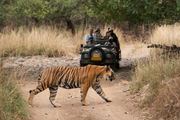 Jaipur To Ranthambore Taxi Cabs | Book Jaipur to Ranthambore Cabs