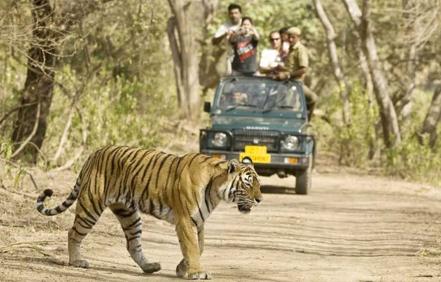 Jungle Safari in India- Wildlife Safari in India